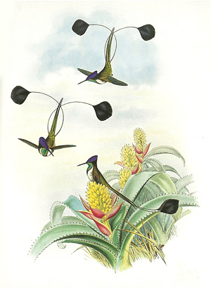 Illustration
