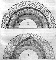 Diagram of crustal collapse