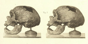 Neanderthal skull views