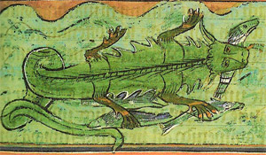 Crocodile and fish
