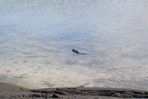A serpentine swimmer