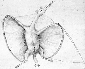 Bat-like pterosaur